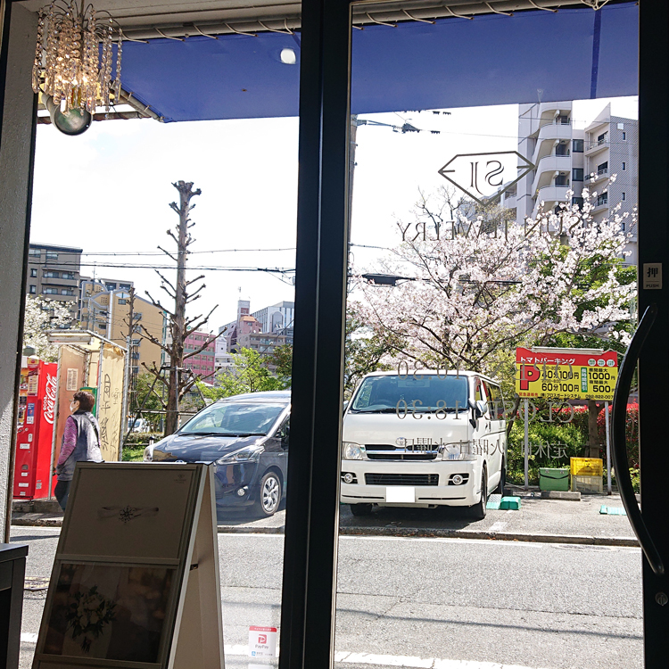 桜 さくら 福岡市城南区別府